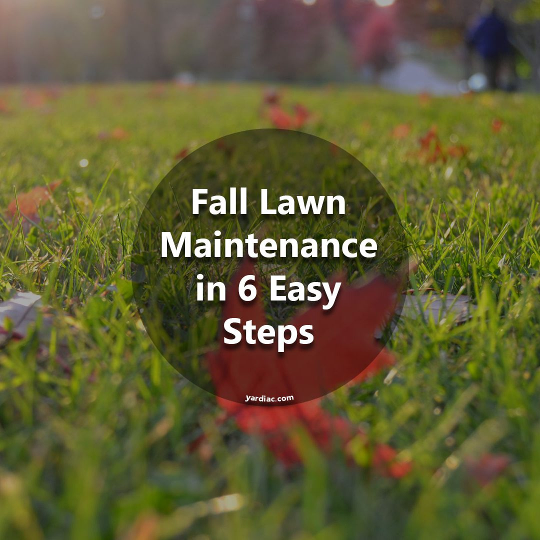Fall Lawn Maintenance in 6 Easy Steps