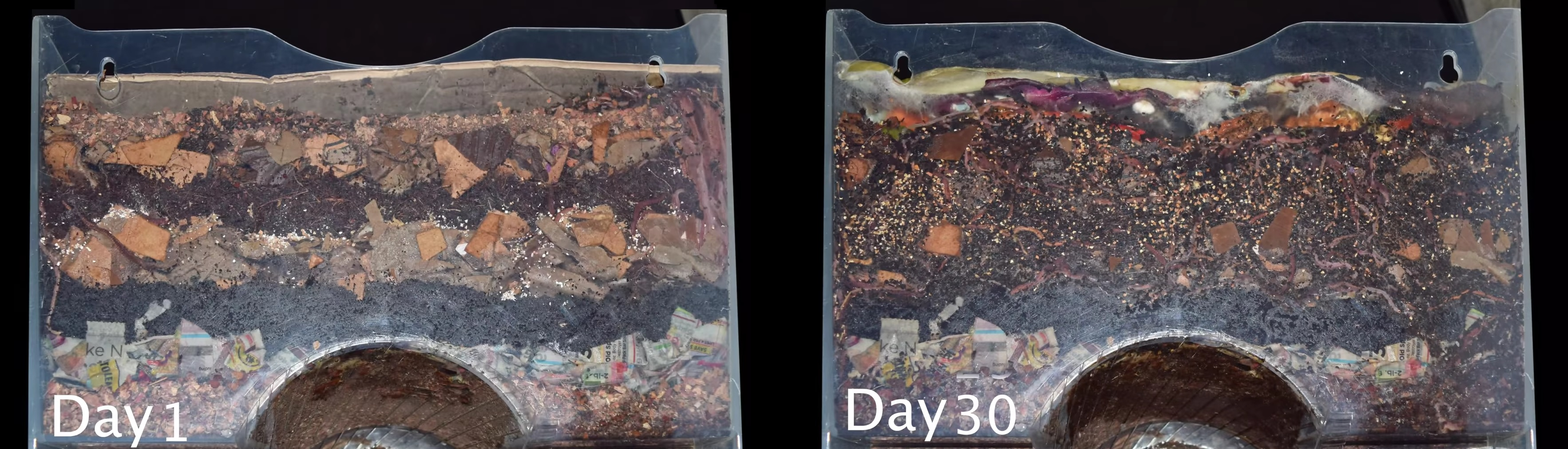 How to vermicompost timelapse