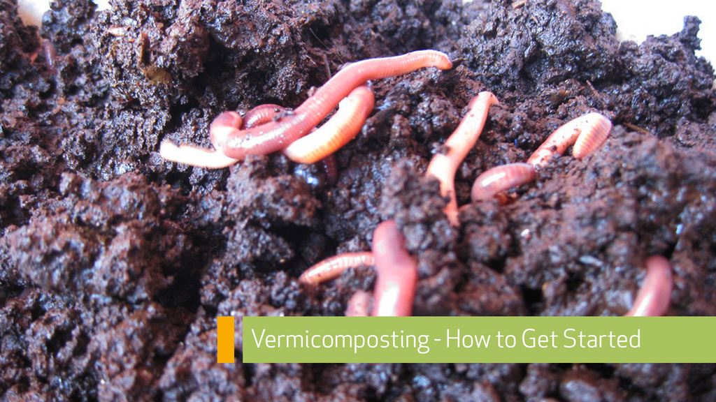 How to get started vermicomposting