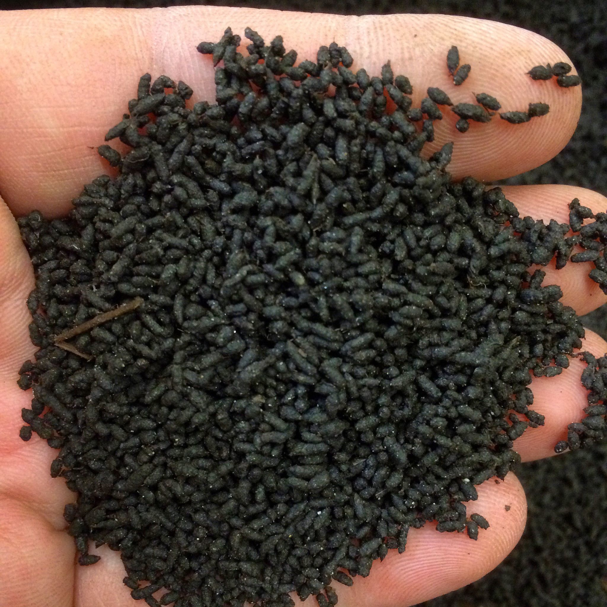vermicompost worm castings